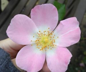 flor, flower, and fotografía image
