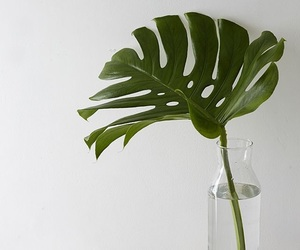 green, plants, and leaf image