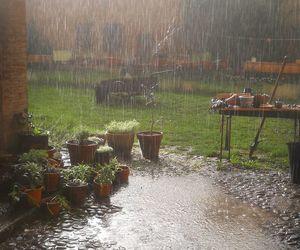 garden and rain image