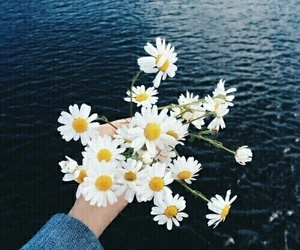 flower, inspiration, and hipster image