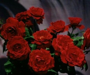 red, rose, and flowers image