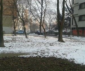 january, snow, and trees image