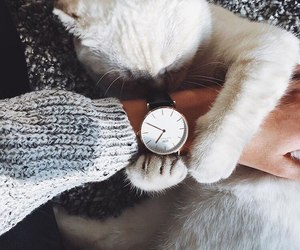 watch, cat, and pet image