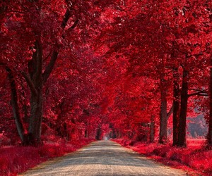 red, tree, and spring image