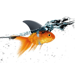 fish and goldfish image