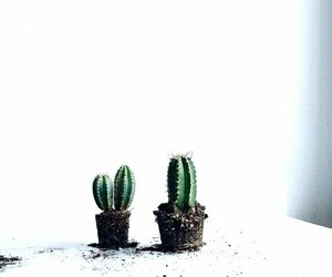cactus and white image