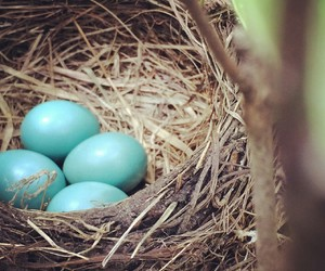 birds, blue, and eggs image