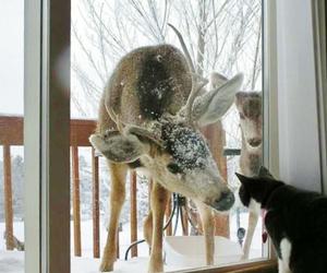 cat, deer, and animal image