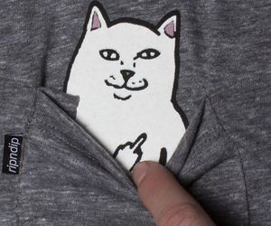 cats, catlove, and the tshirt image