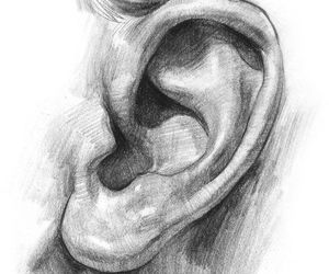 drawing and ear image