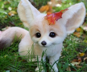 animal, fennec, and cute image