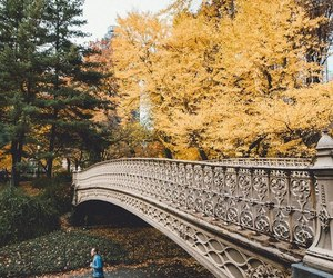 Central Park, nature, and beautiful image