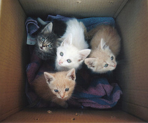 awesome, box, and cat image