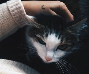 cat, animal, and tattoo image