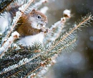 animal, beautiful, and winter image