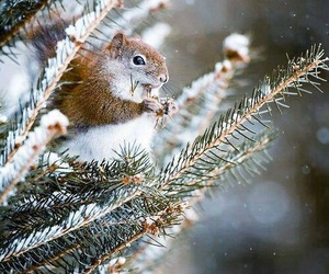animal, beautiful, and winter image