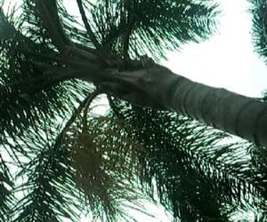 naturaleza, nature, and palms image