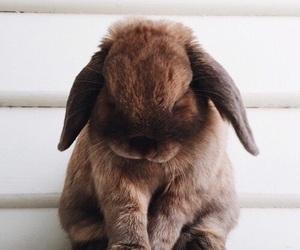 animal, tumblr, and love image