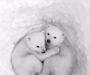 animal, cute, and bear image