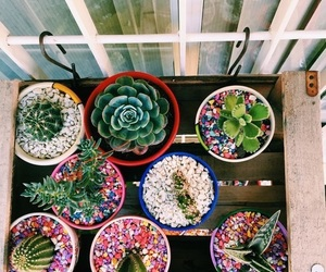indie, plants, and tumblr image