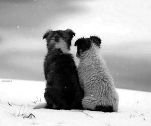 dog, animal, and snow image
