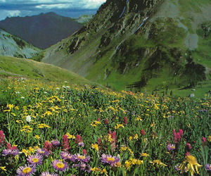 flowers, mountain, and nature image