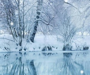 frozen, snow, and trees image