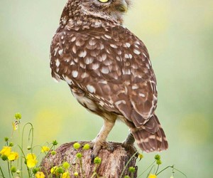 owls - birds - country - image
