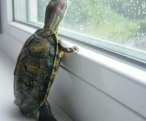 aesthetic, rain, and turtle image