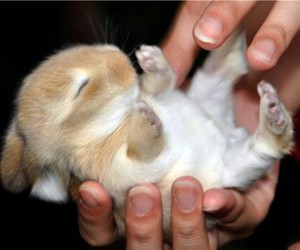 adorable, rabbit, and awwwh image