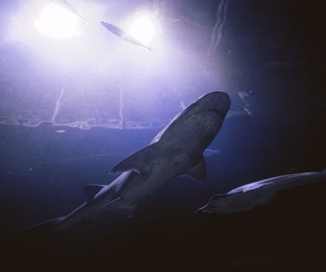aquarium and shark image