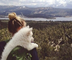 dog, forest, and traveling image
