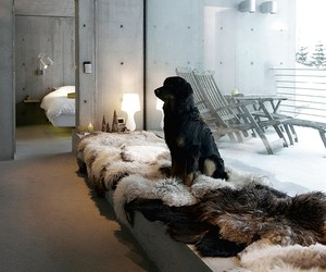 design, dog, and fireplace image