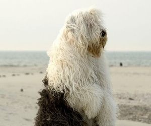 dog and beach image