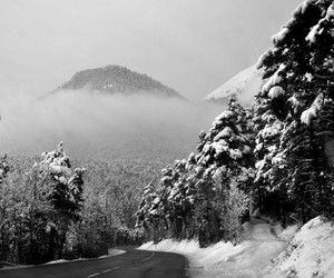 black and white and winter image