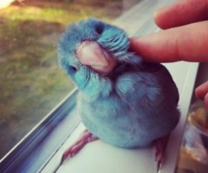 bird, cute, and blue image