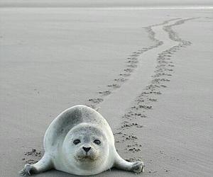 animal, beach, and sand image