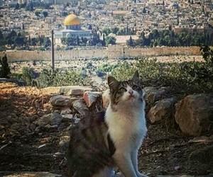 قطه, فلسطين, and ّالقدس image