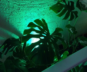 green, plants, and neon image