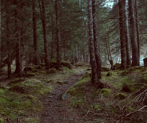 austria, forrest, and mysterious image