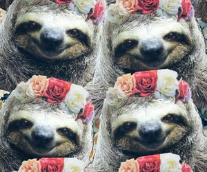 animals, flowers, and sloth image