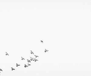 bird, fly, and sky image