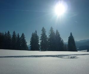 winter, schwarzwald, and schnee image