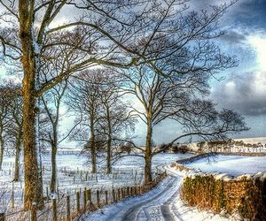 tree, road, and winter image