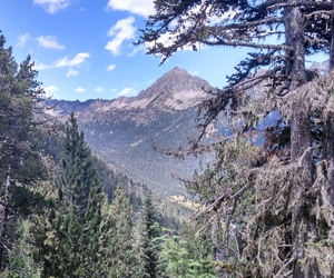 mountain and trees image