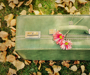 flowers, suitcase, and travel image