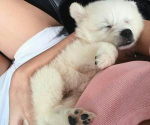 animals, dog, and love image