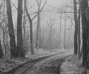 black and white, beautiful, and forest image