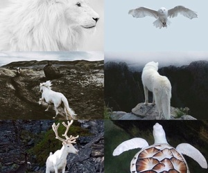 white, horse, and turtle image
