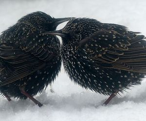 bird, starling, and nature image